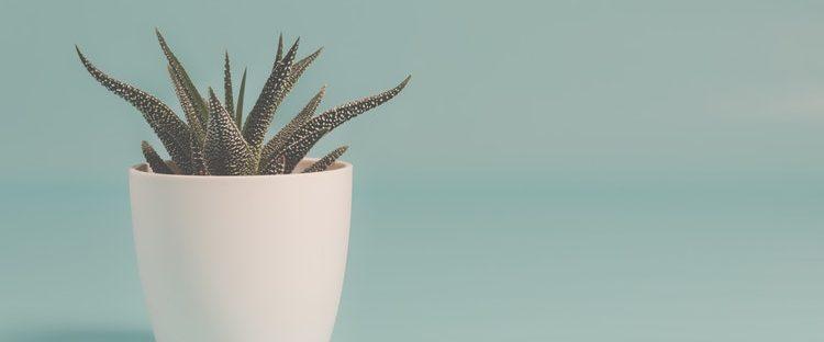 Cactus at sober living home in Boston Massachusetts